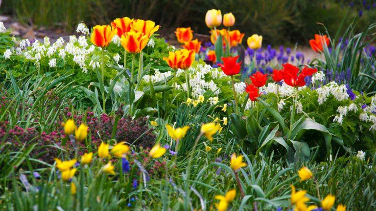 Llega la primavera a MOOC-INTEF y NOOC-INTEF con nuevos cursos