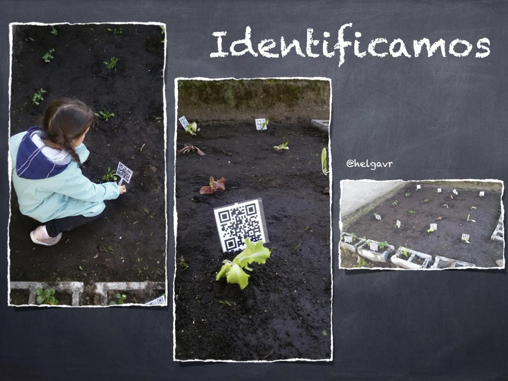 Identificación de las hortalizas con códigos QR.